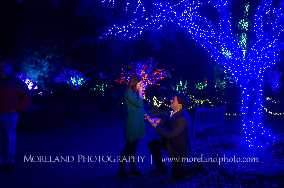 Atlanta Botanical Gardens Christmas Proposal |Derek + Chelsea